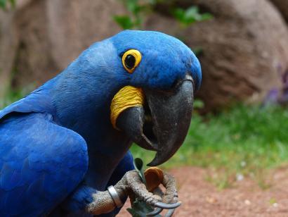 papoušek do bytu